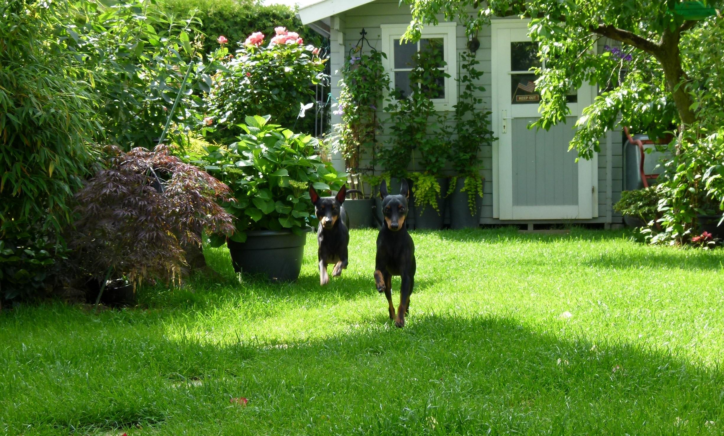 Luke und Ron im Garten