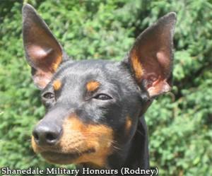 Shanedale Military Honours