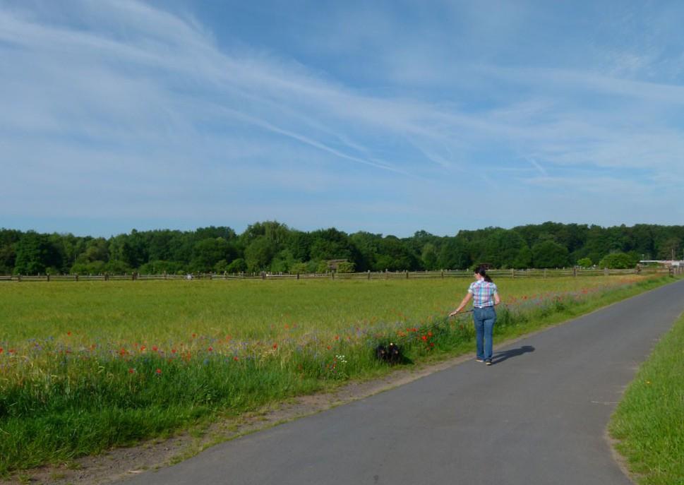 Feld in Rodenbach