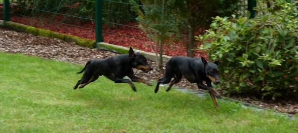 Luke und Ron Rennen